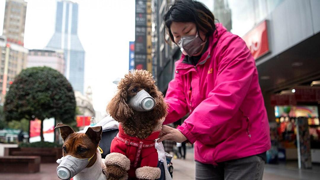 Perro mascota contagiado coronavirus