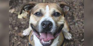 Perro mayor ha esperado en el refugio durante 9 años