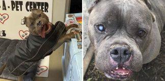 Perro no ha sido adoptado en un año por la forma en que se vé