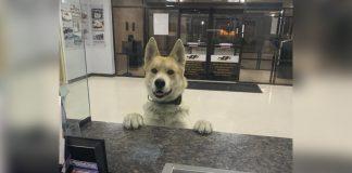 Perro perdido entra a la estacion de policia para reportarse como desaparecido