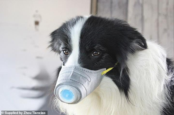 Perro usando protección contra coronavirus