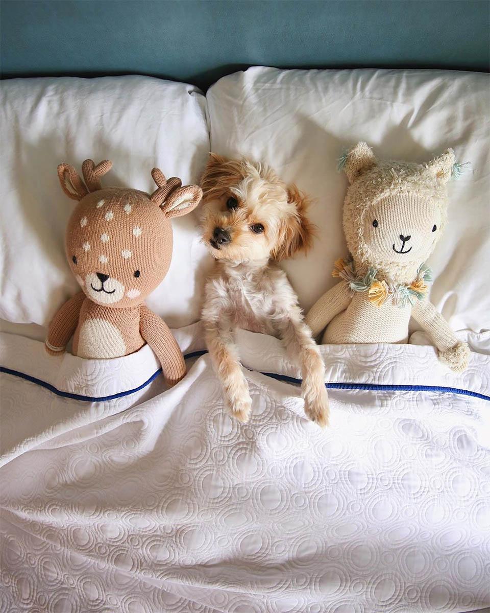 Perros del hotel