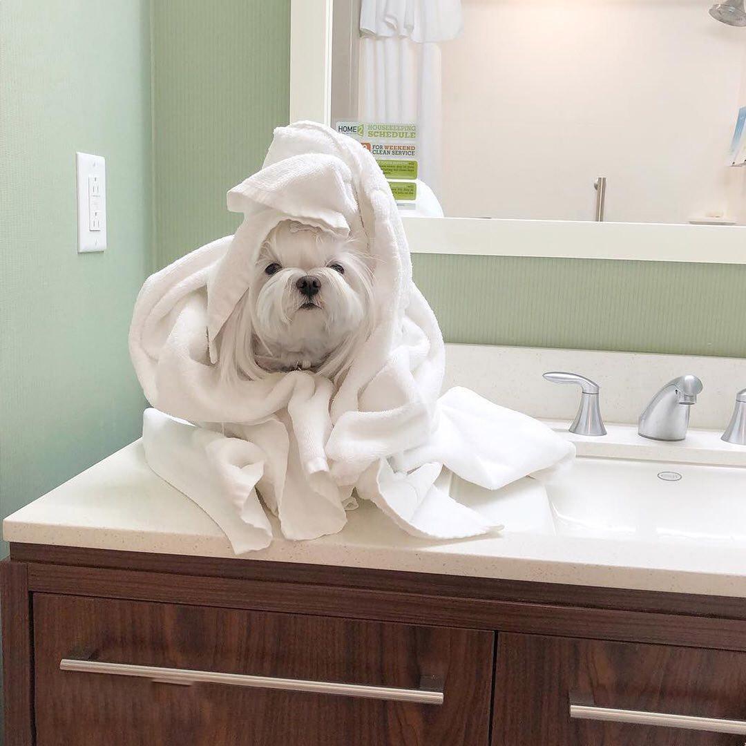 Perros en hogar de acogida