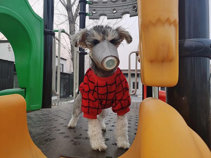 Prevención para mascotas