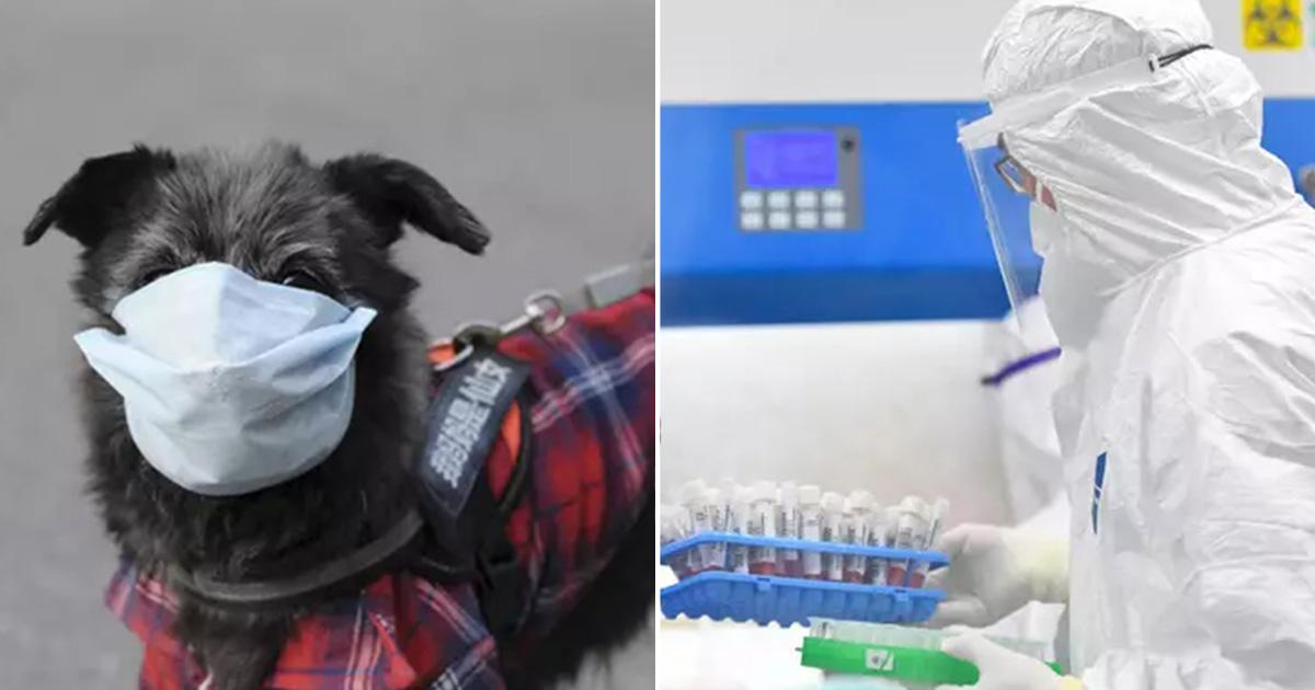 Pruebas de perro mascota son positivas para el coronavirus en Hong Kong