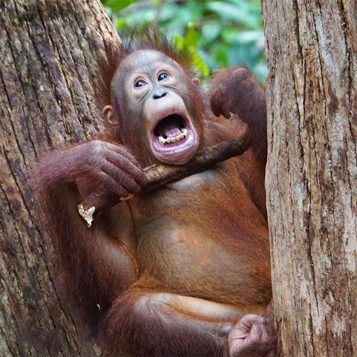 Selva protegida de Borneo