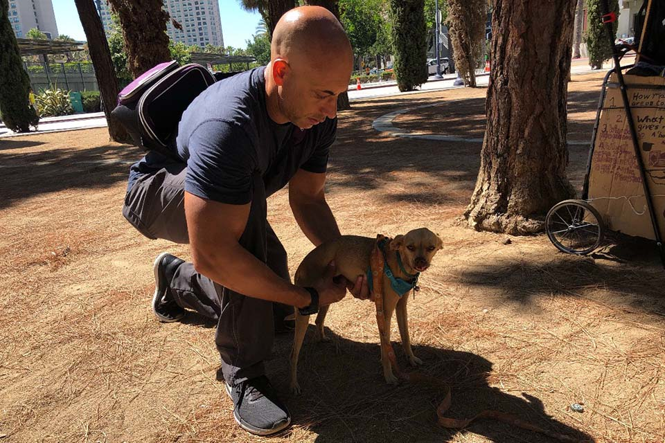 Veterinario atiende mascotas sin hogar