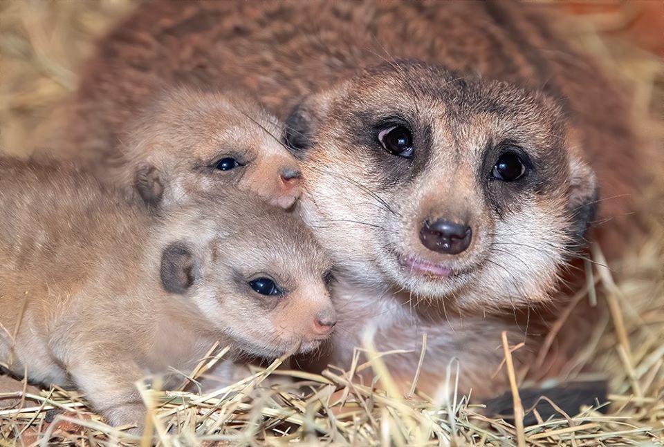 Yam Yam y sus bebés
