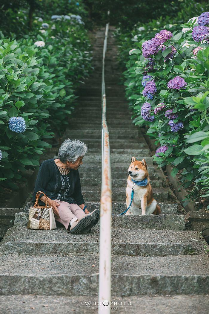 abuela y su shiba en escaleras