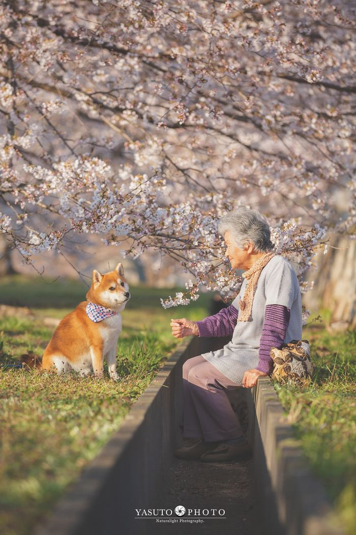 adulto mayor y su shiba inu entre arboles