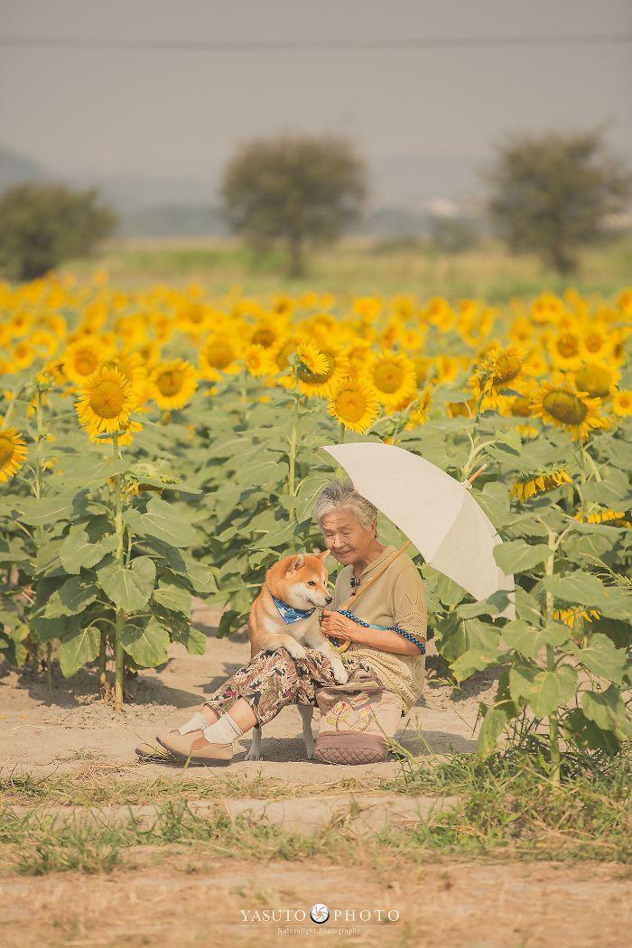 abuela y su perro entre girasoles