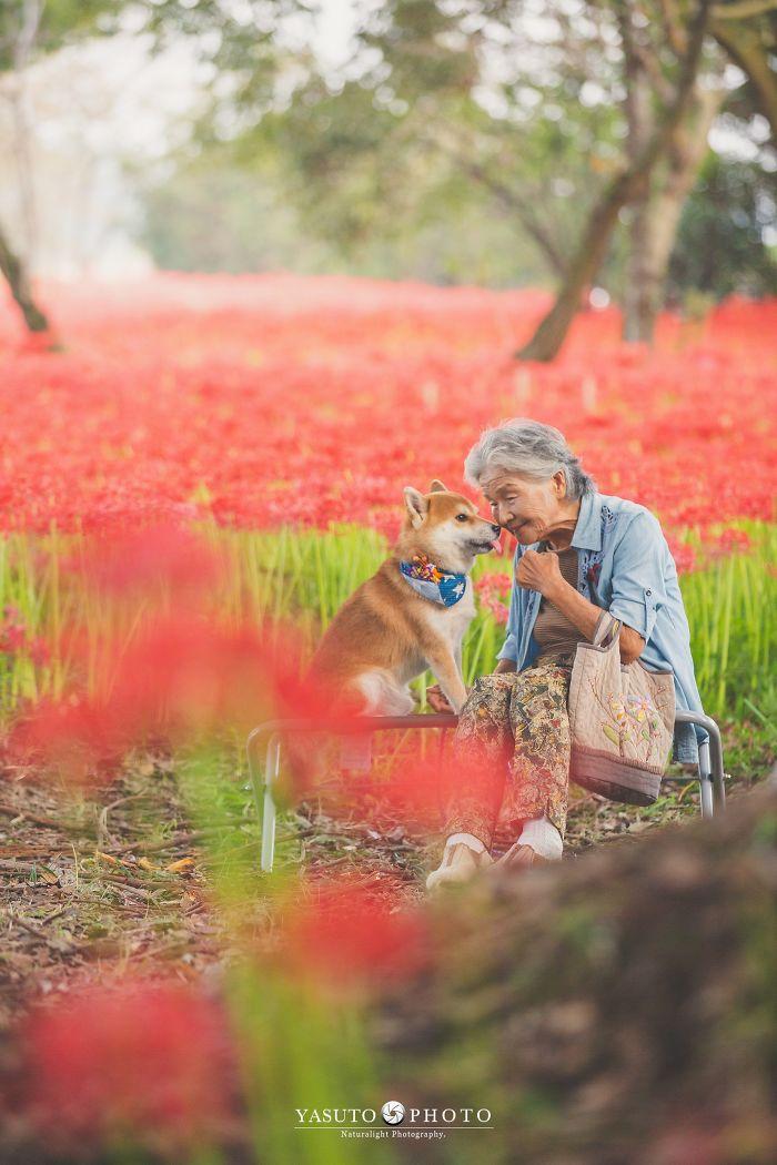 adulto mayo y su animal doméstico en un campo de flores rojas