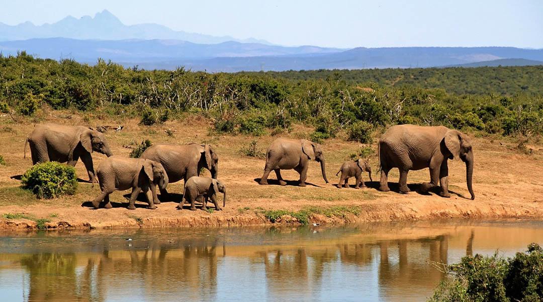 Caza de elefantes en Botswana