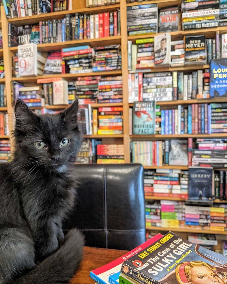 Gatos viven en librería