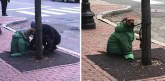mujer da a su perro su chaqueta