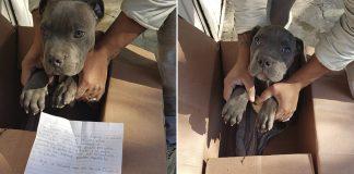 Niño abandonó a su perro en un refugio para salvarlo de los maltratos de su padre