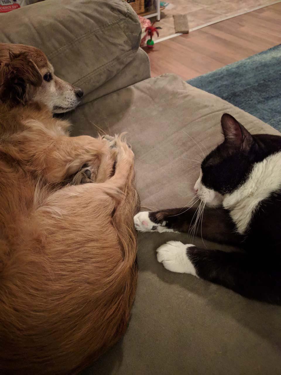 Animales de compañia descansan en su hogar