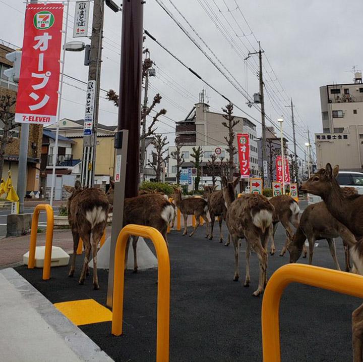 Animales en las calles de Japón