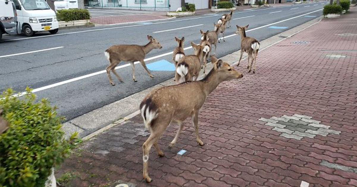 Animales invaden ciudades mientras las personas están en cuarentena