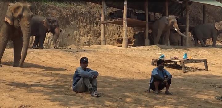 Animales liberados en Tailandia
