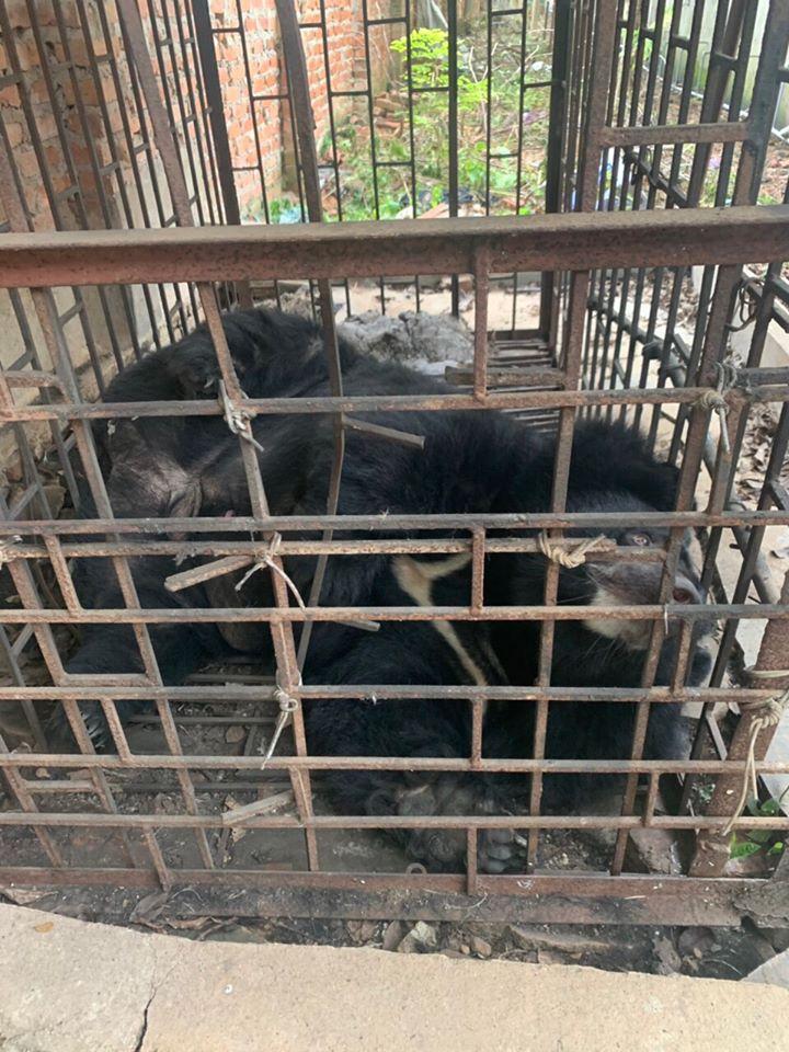 Bilis de oso para tratamiento