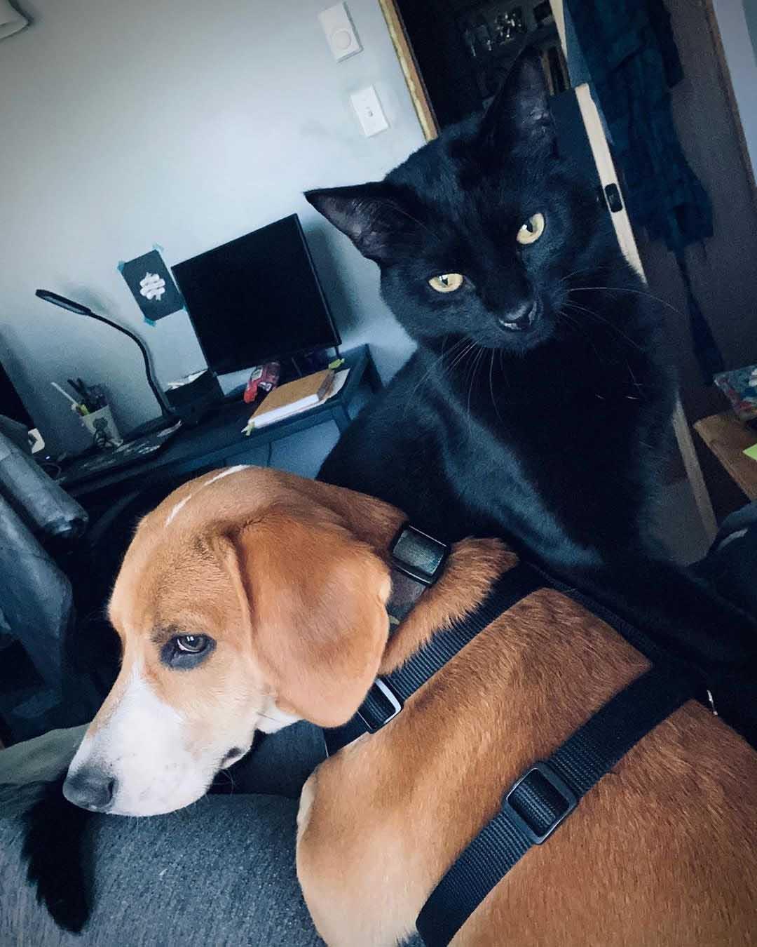 Bo y Jasper