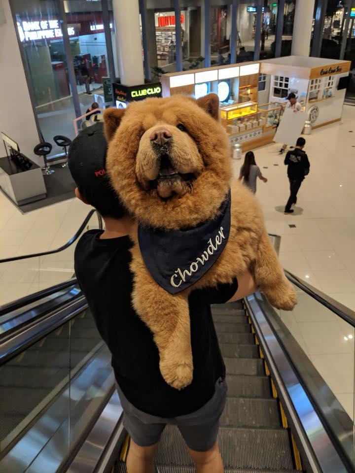 Chowder en centro comercial