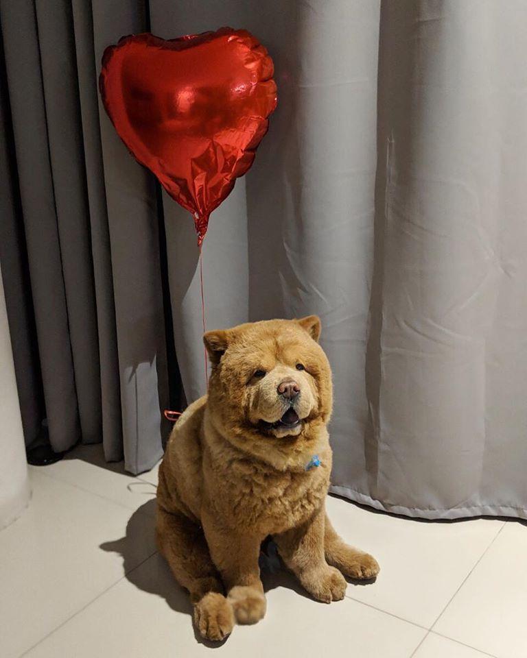 Chowder, parece oso de peluche
