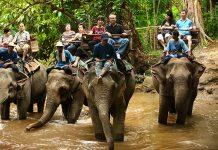 Decenas de elefantes utilizados para transportar turistas fueron liberados en Tailandia