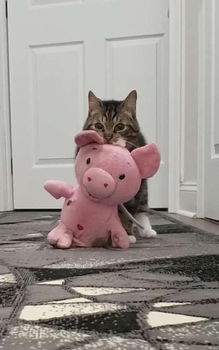 Diego y su cerdo de peluche