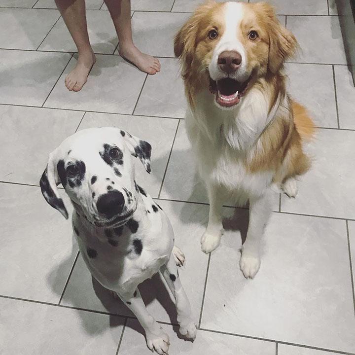 Dos perros felices sentados