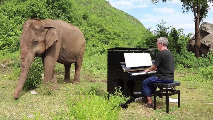 Elefante escuchando música clásica