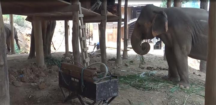 Elefantes libres en campamento
