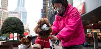 Empresa china promueve el consumo de carne de perro