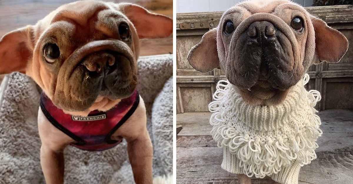 Este cachorro fue rescatado de un matadero y se parece al bebé Yoda