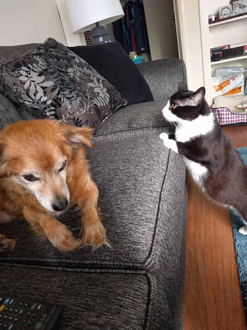 Gatito y perrito son inseparables