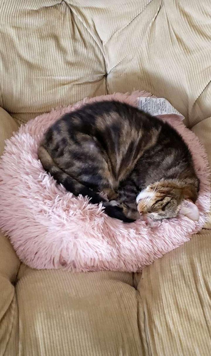 Gato en la almohada