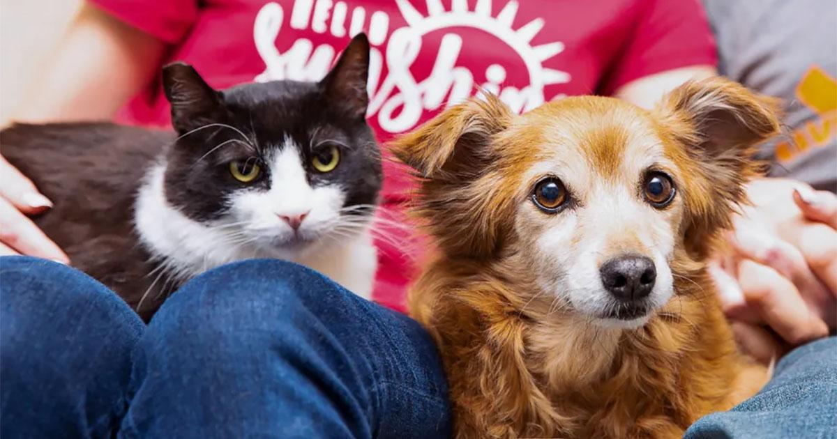 Gato hace amigo de un perrito para ser adoptado