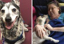 Grupo permite que los pacientes de hospicio se queden con sus animales