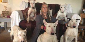 Hombre hizo que su esposa eligiera entre sus perros de rescate y él