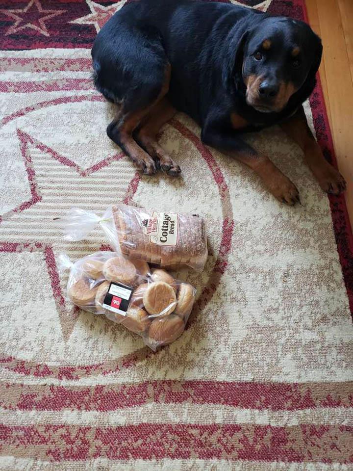 Jakey cuidando el pan