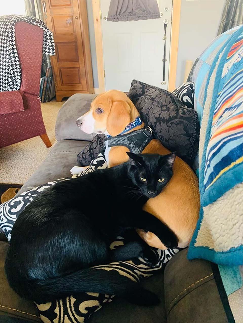 Jasper y Bo