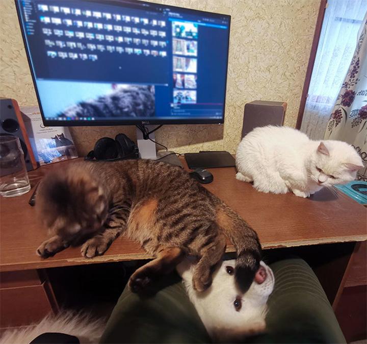 Animales interrumpen trabajo