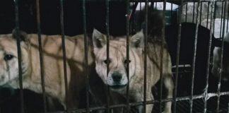 Mercados chinos siguen vendiendo animales domésticos y salvajes