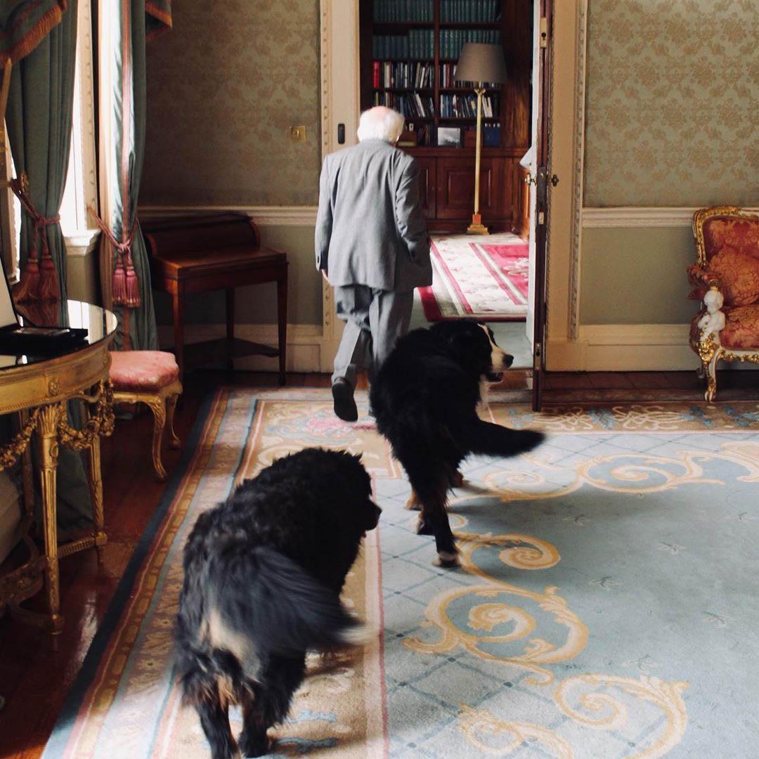 Michael D y sus perros