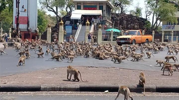 Monos hambrientos peleando por comida