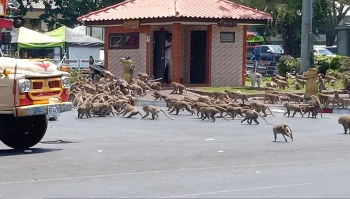 Primates peleando por comida