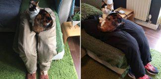 Pareja tranquiliza a su gato súper pegajoso con un regazo falso