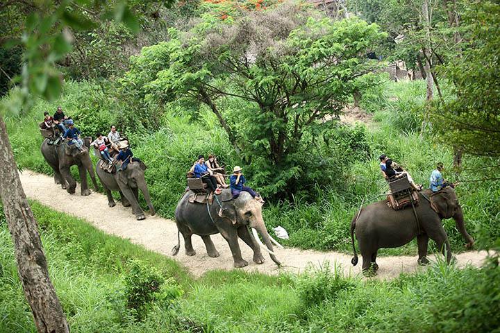 Paseo de elefantes