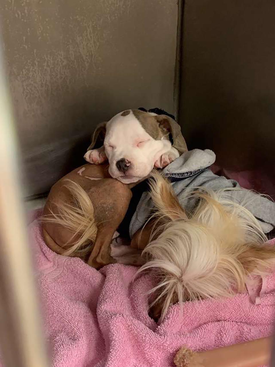 Perrita se acurruca para dormir con perrito